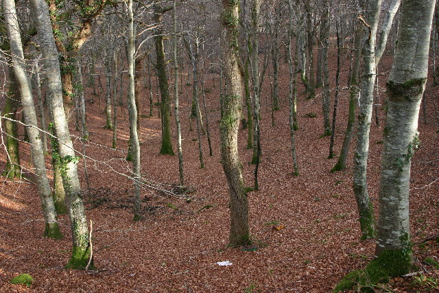 Woods near Darnaway Castle