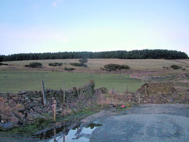 Wood on Haslingden Moor