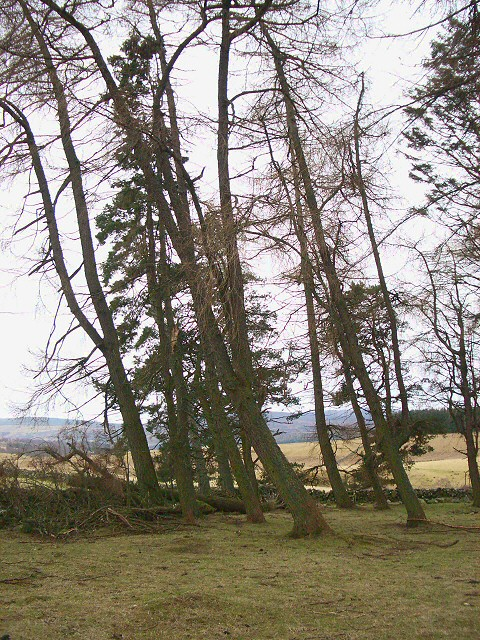 Copse near Ashintully Castle