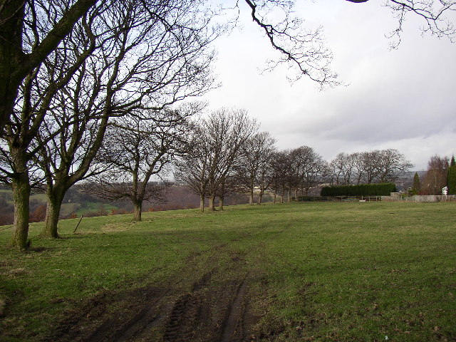 Line of trees off Boothroyd lane, Rastrick, Yorkshire