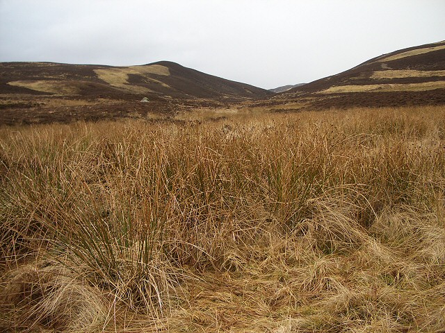 Reeds in marshy valley