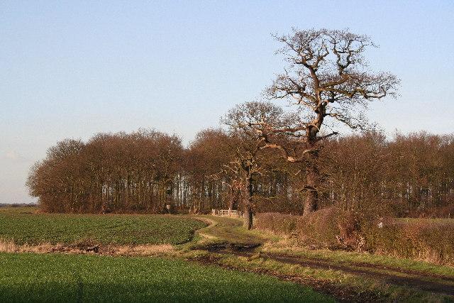 Willoughton Wood
