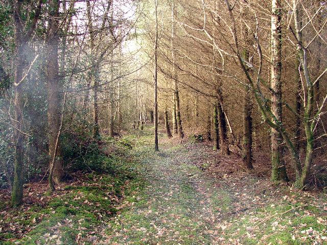 Track Through Park Wood