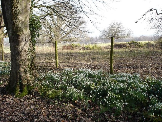 Woodland walks at Bodelwyddan