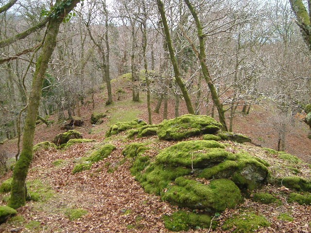 Wooded ridge between Rivers Tavy and Walkham