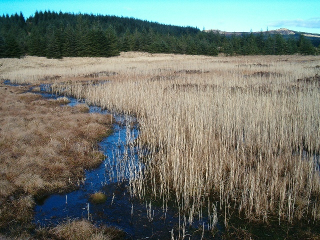 Small lochan with rushes
