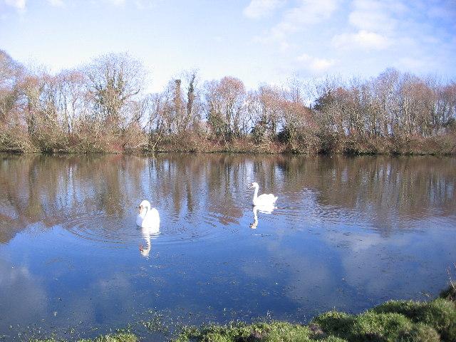The Swan Pond at Salt Cotes.
