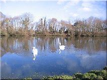 NY1853 : The Swan Pond at Salt Cotes. by John Holmes
