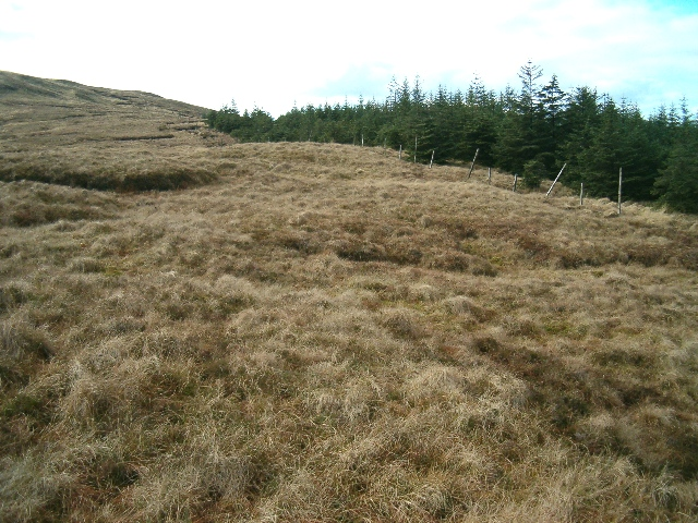 Moorland and forest