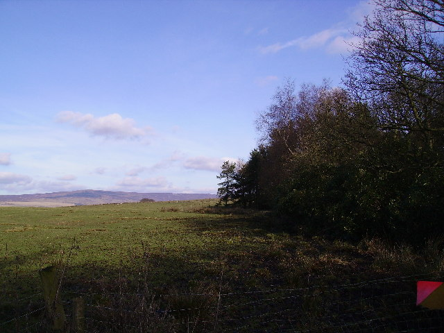 Wood near Yates Farm