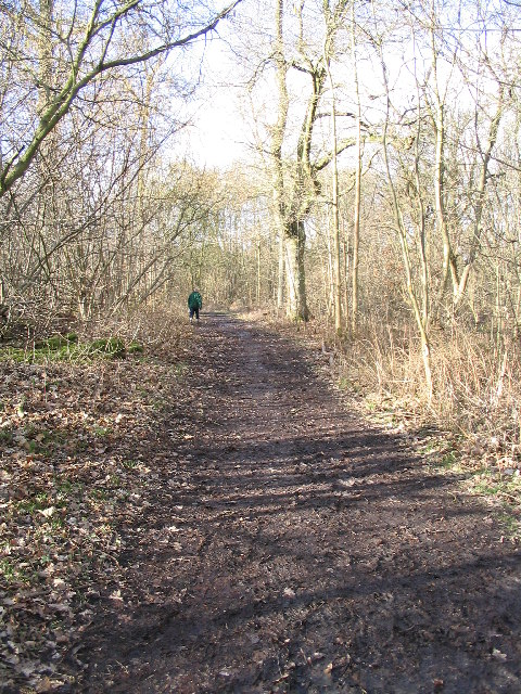 Little Wittenham Wood