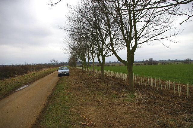 Newly planted hedging near Atterby