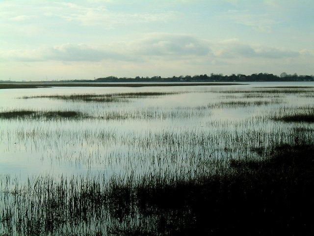 Coastal mudflats