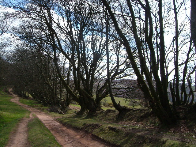 Quantock walk near head of Triscombe Combe