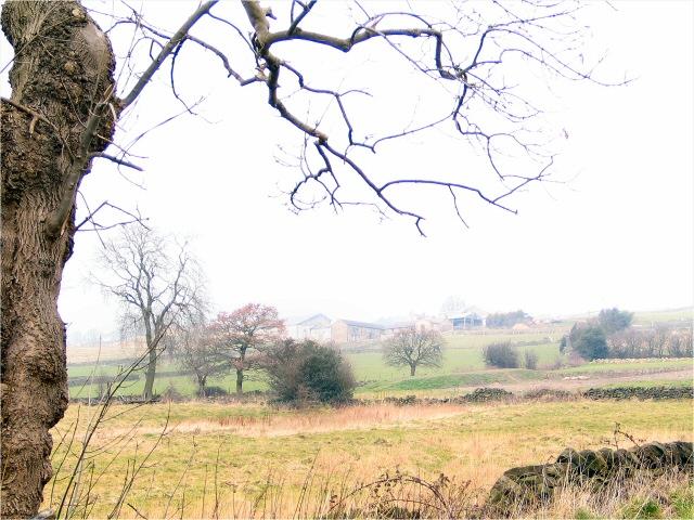 Below Holdworth Farms