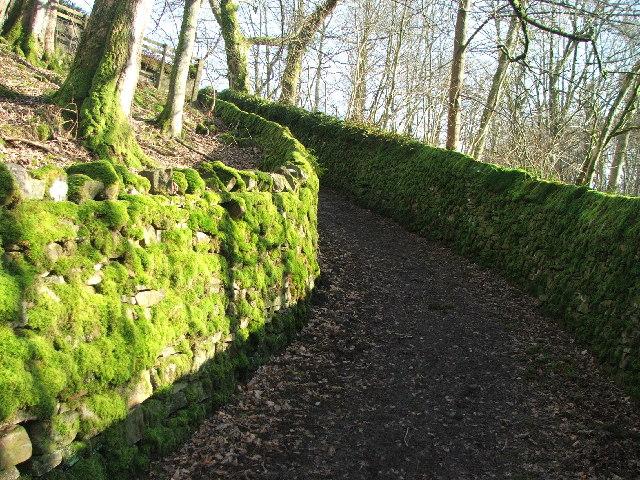 A mossy lane.