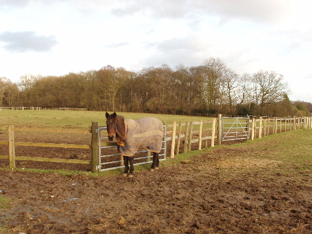 Paddock and horse, Newhouse Farm, Chorleywood