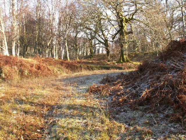 Birch wood track