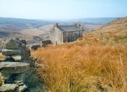 Abandoned farm, Birkdale