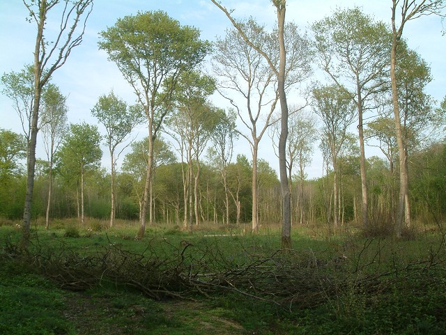 Knowlands Wood