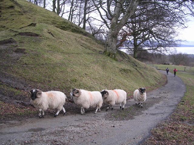 Sheep near Shemore Farm