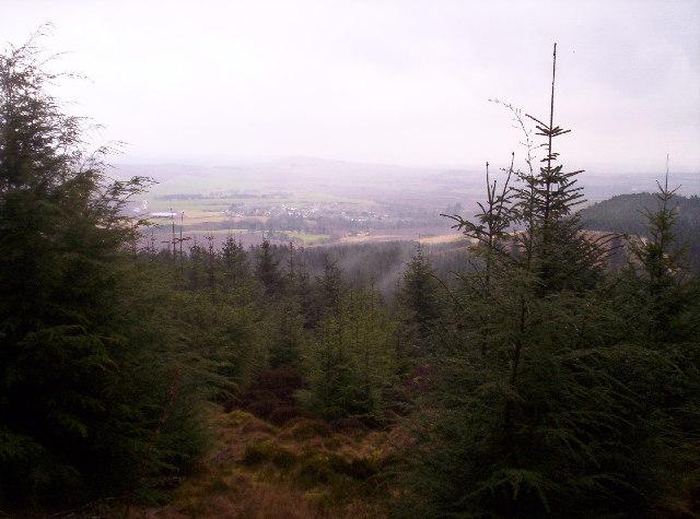 Drumelzie Wood and Auchenblae