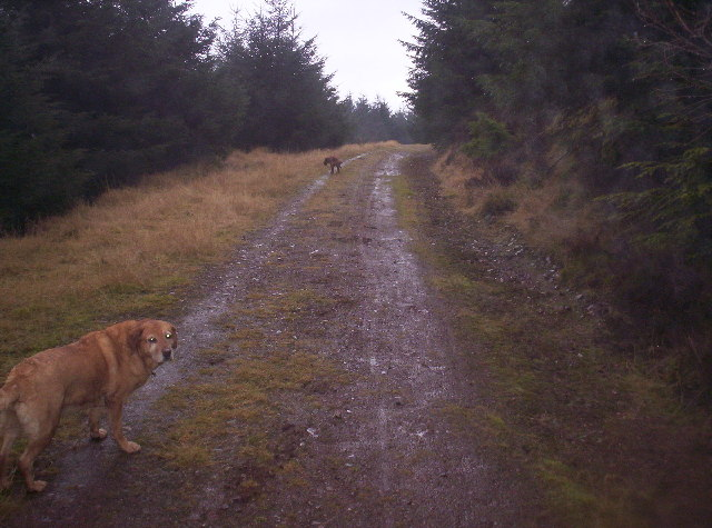 Track in Drumelzie Wood