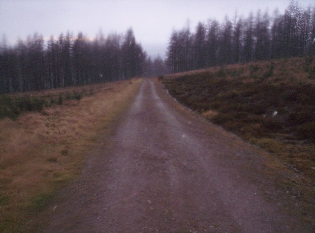 Forestry Road in Hill Wood