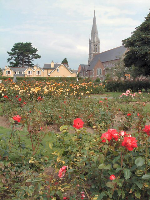 Roses of Tralee