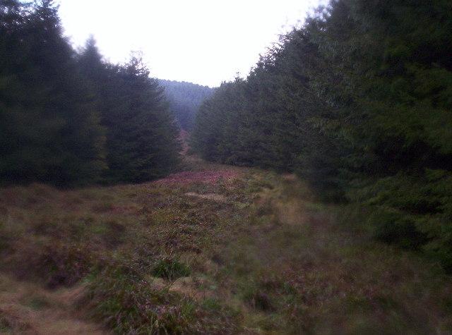 Trees Alongside a Hidden Burn