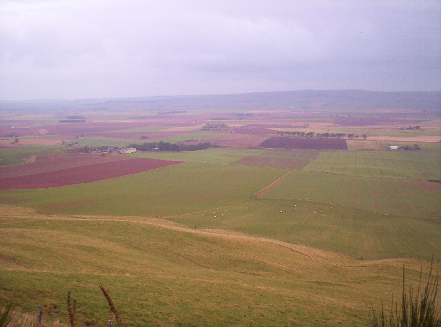Mearns From Drumtochty Forest