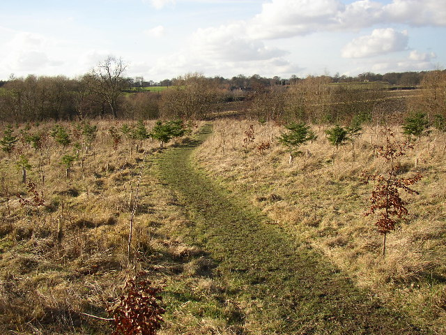 Short cut through plantation, Hartshead, Yorkshire