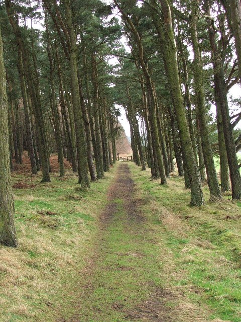 Path towards St. Cuthbert'sCave
