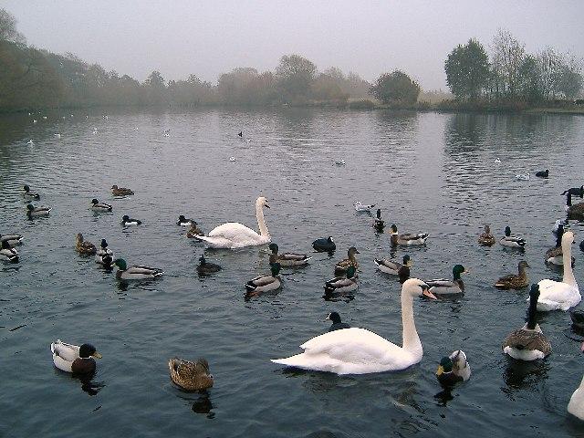 Winterley Pool