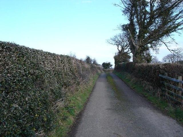 High hedged lanes