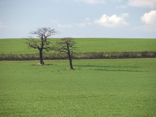 Trees in field.