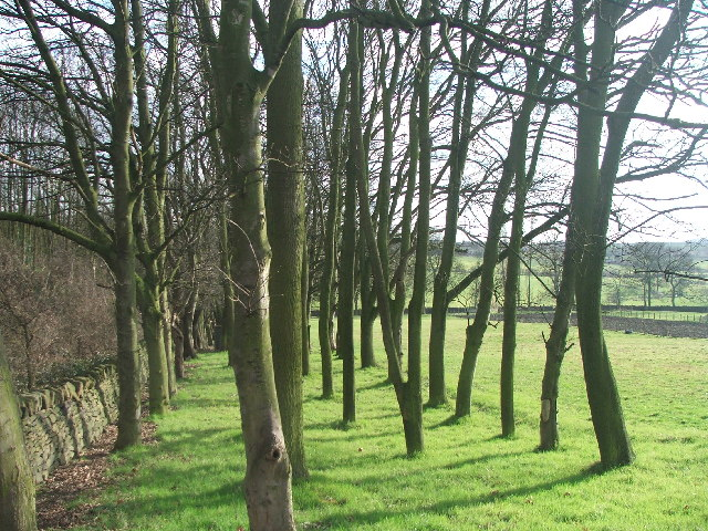Trees on Boyne Hill.
