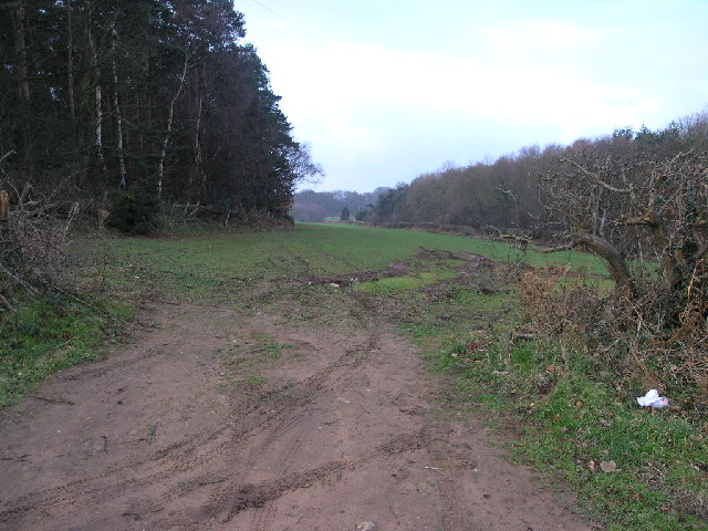 Woodland and Field