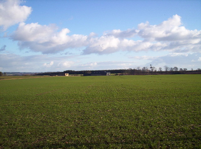 Mains of Ardovie and Cabbage Field