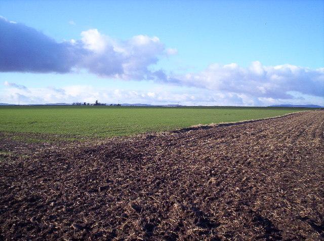 Fields Near Muirside  of Aldbar