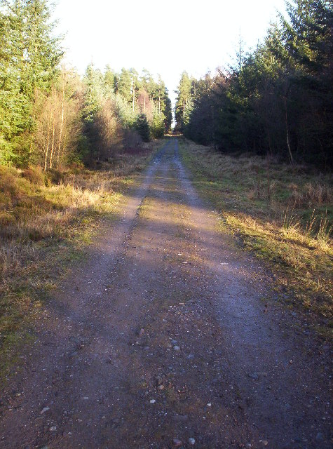 Forestry Track in Montreathmont Forest