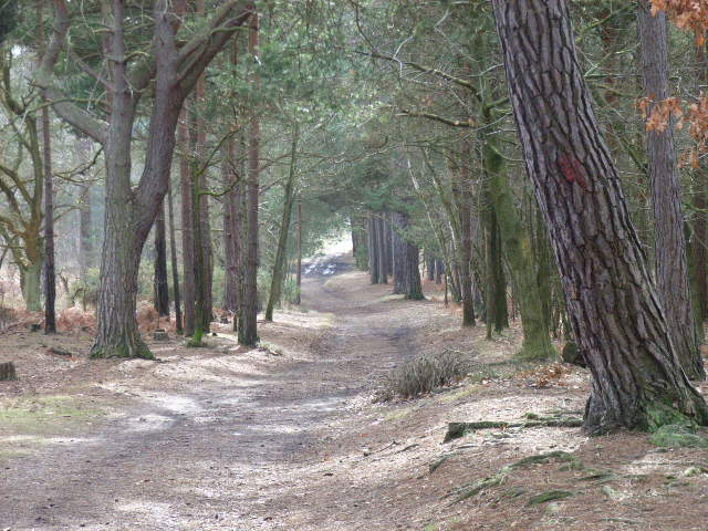 Track descending to Wishmoor Bottom