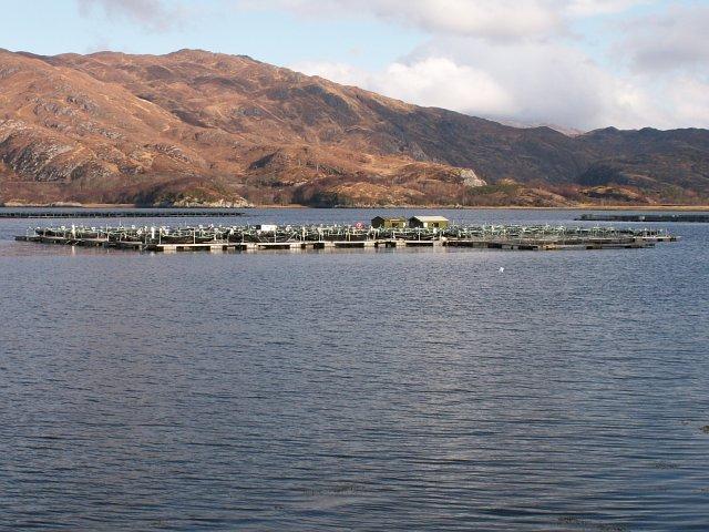Fish cages at Kinlochailort