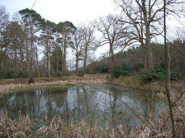 Pond next to the A322