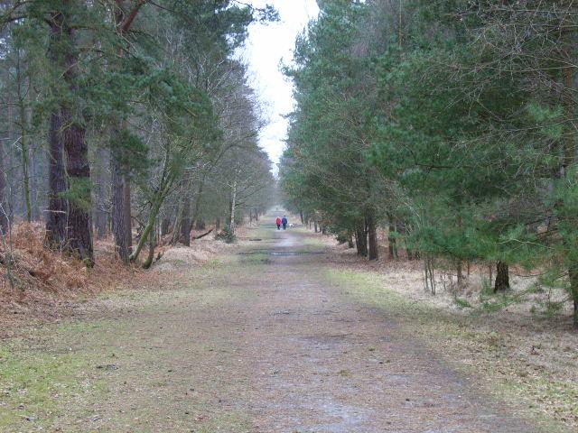 Track, Whitmoor Bog, Swinley Park