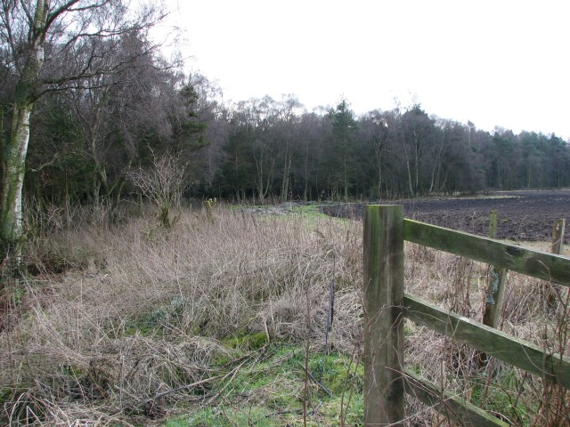 North edge of Portmoak Moss