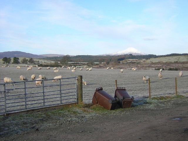 Sheep, Bins and Ben