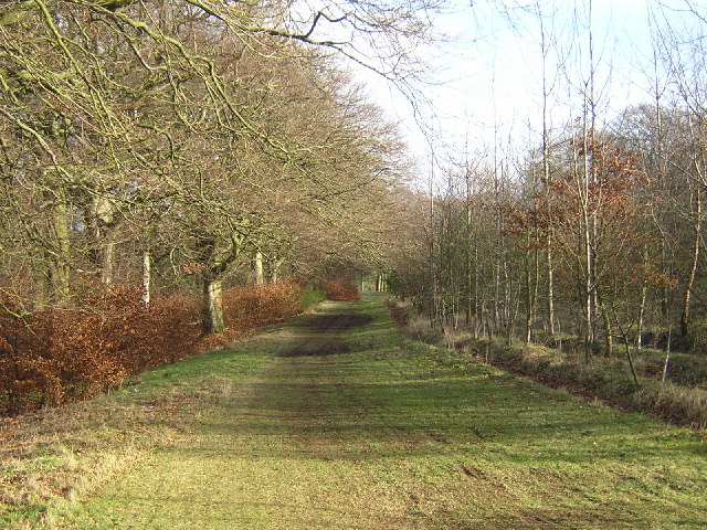 Forest Path on Cathkin Braes