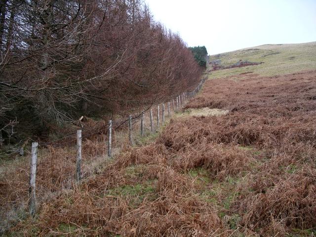 Plantation boundary fence, Riskinhope Rig