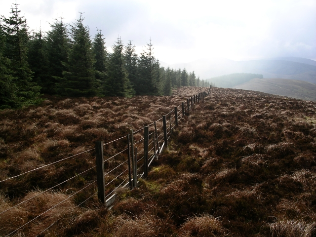 Forestry fence, The Wiss